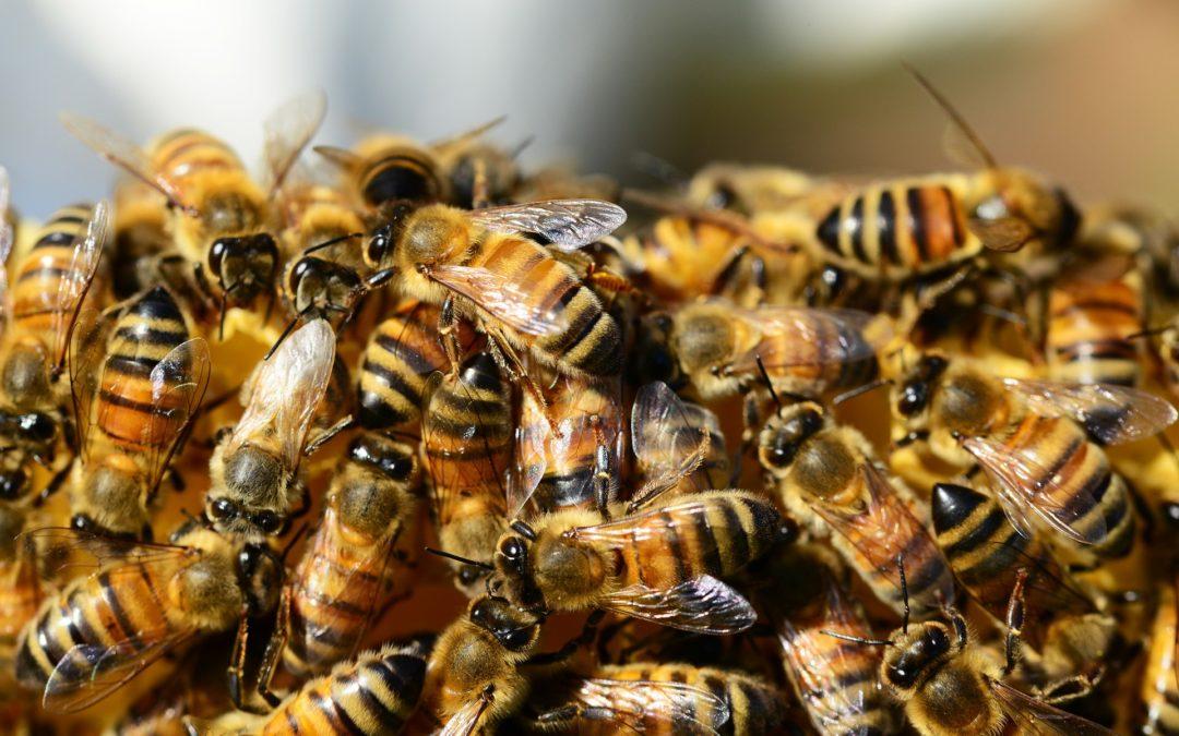 Bienenzucht auf den Nordseeinseln