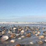 Baltrum-Muscheln-am-Strand