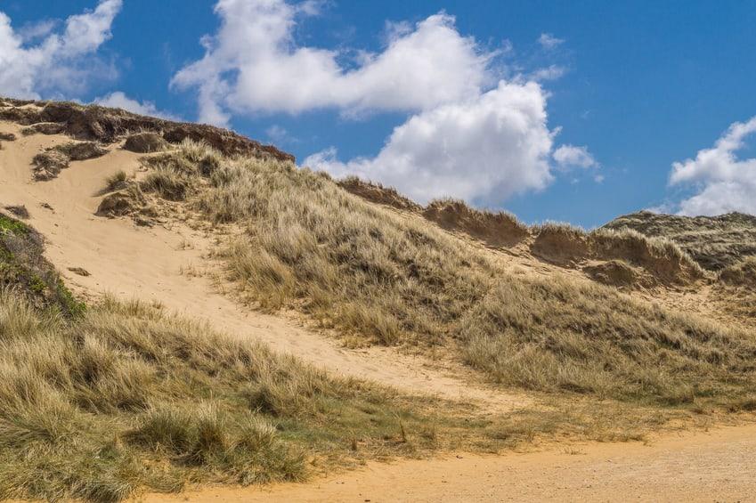 Wanderdüne auf der Nordseeinsel Sylt mit Strandhafer bewachsen.