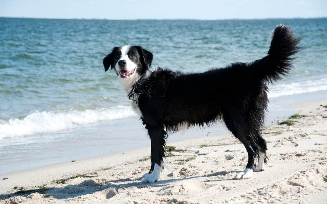 Urlaub mit dem Hund auf den Nordseeinseln