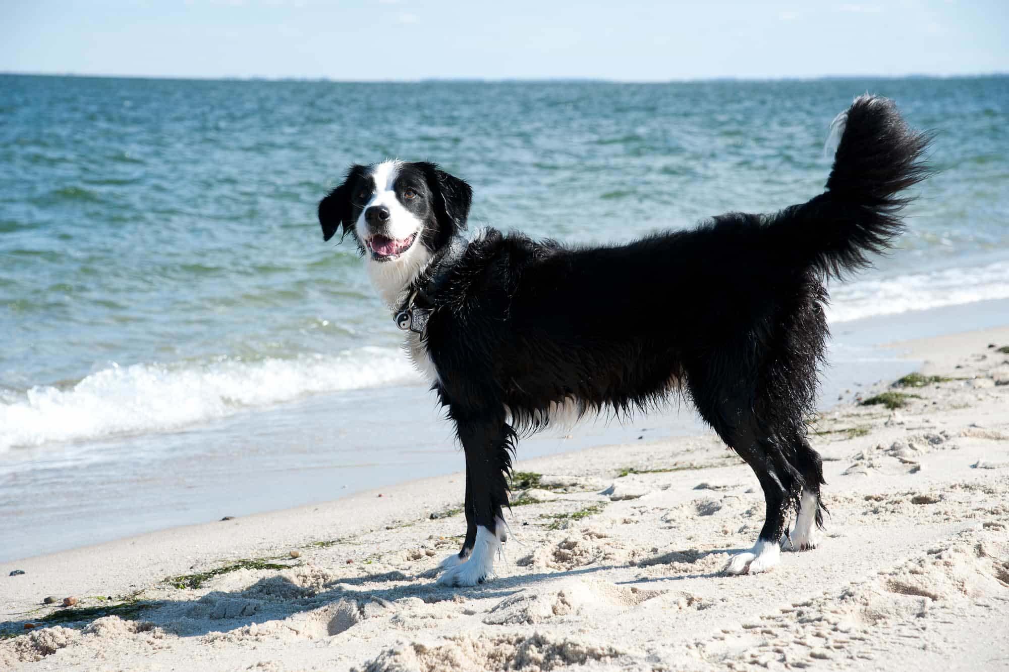 Hundestr nde auf den nordseeinseln nordseeinseln urlaub for Urlaub mit hund auf juist