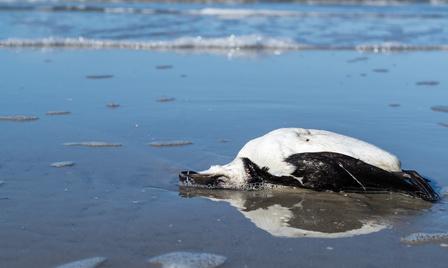 Nordseeinseln Toter Vogel - Meeresverschmutzung
