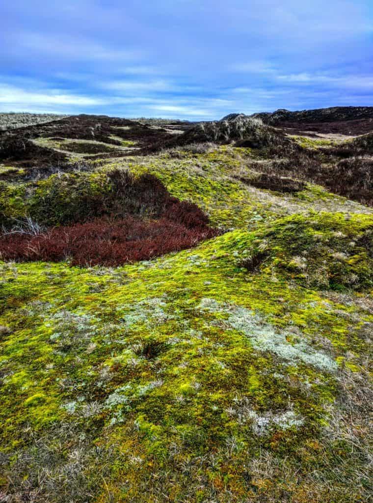 Nordseeinseln Urlaub Langeoog Dünenlandschaft