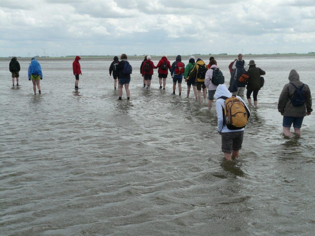 Wattwanderung im Nordseeinseln Urlaub auf Nordstrand