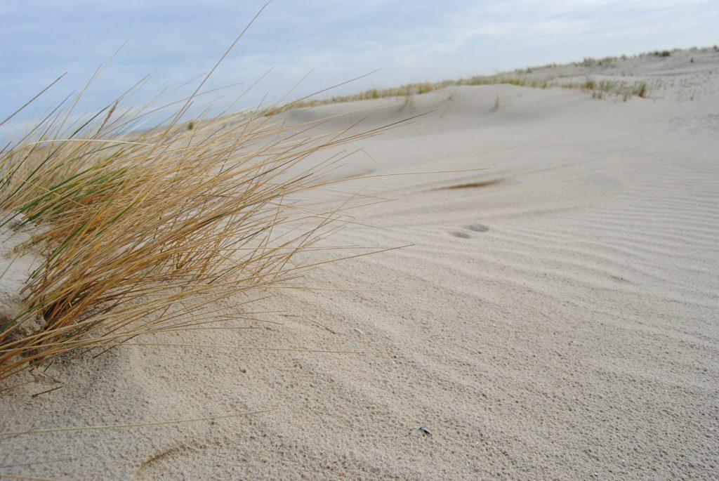 Traumhaft weißer Dünensand auf der Nordseeinseln Spiekeroog