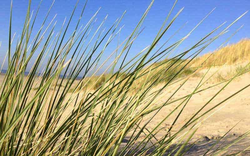 Ostfriesische Inseln - Strand Grashalme