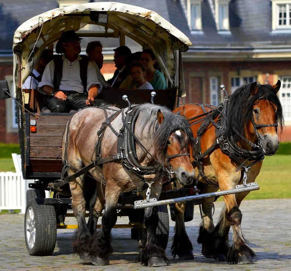 Das Pferdetaxi als Verkehrsmittel auf Juist