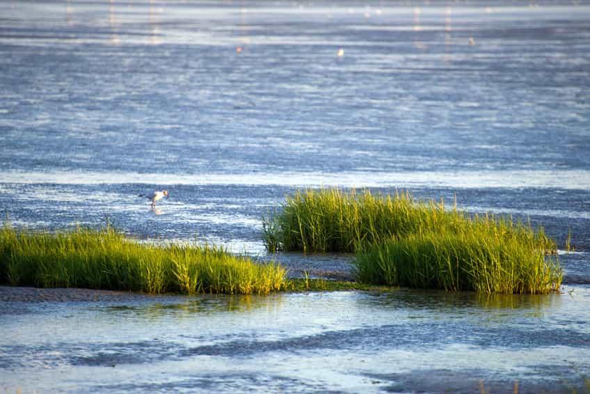 Die Salzwiesen vor den Nordseeinseln bei Flut