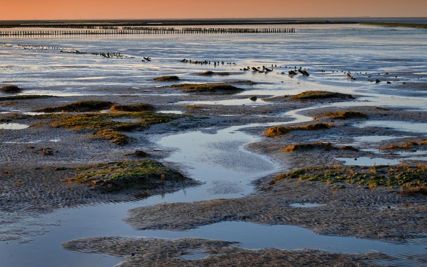 Sonnenuntergang von den Salzwiesen beim Norderney Wrack