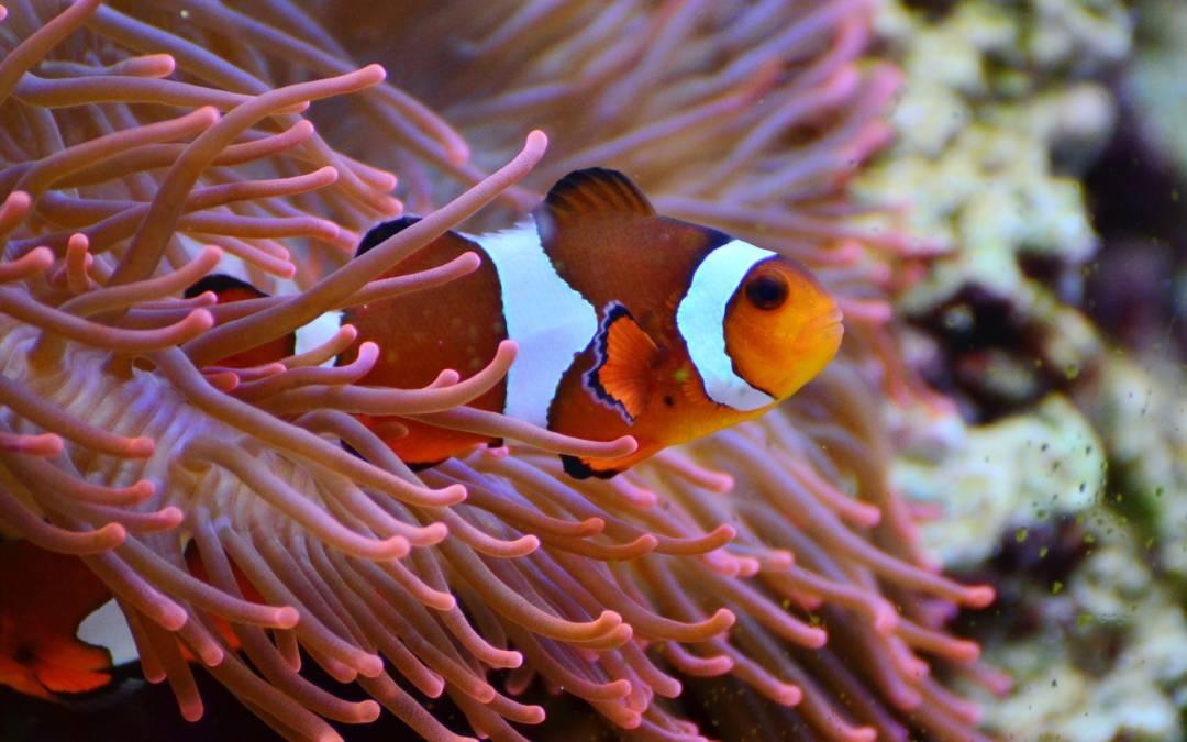 Sylt Aquarium – Hier entdeckst du die Unterwasserwelt