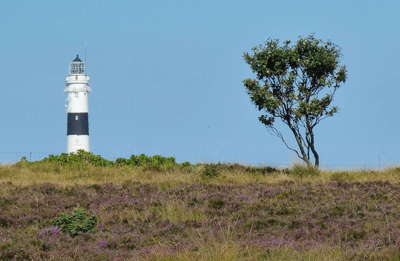 Die Braderuper Heide auf der Nordseeinsel Sylt