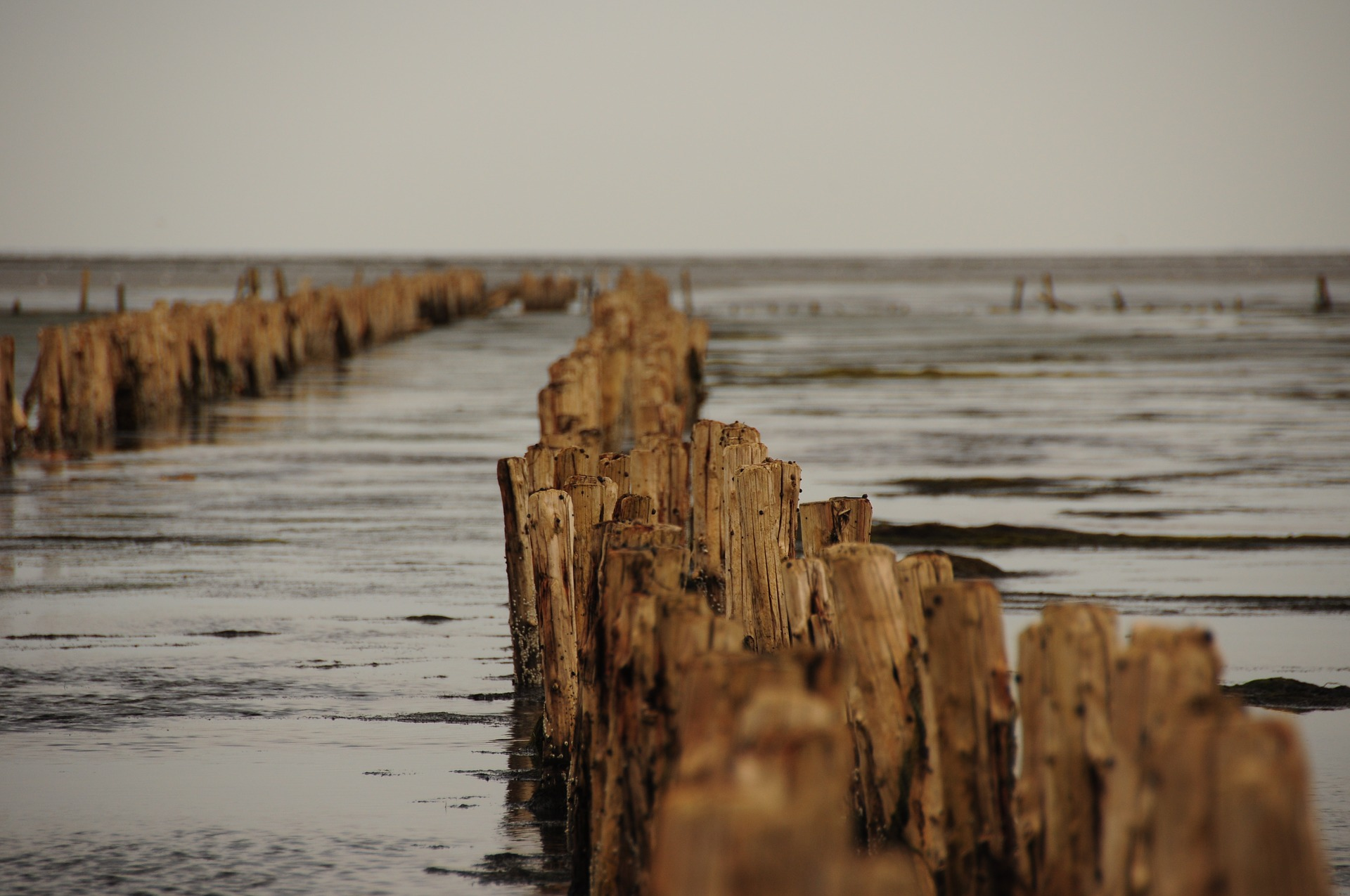 Sylt Whisky Wattenmeer