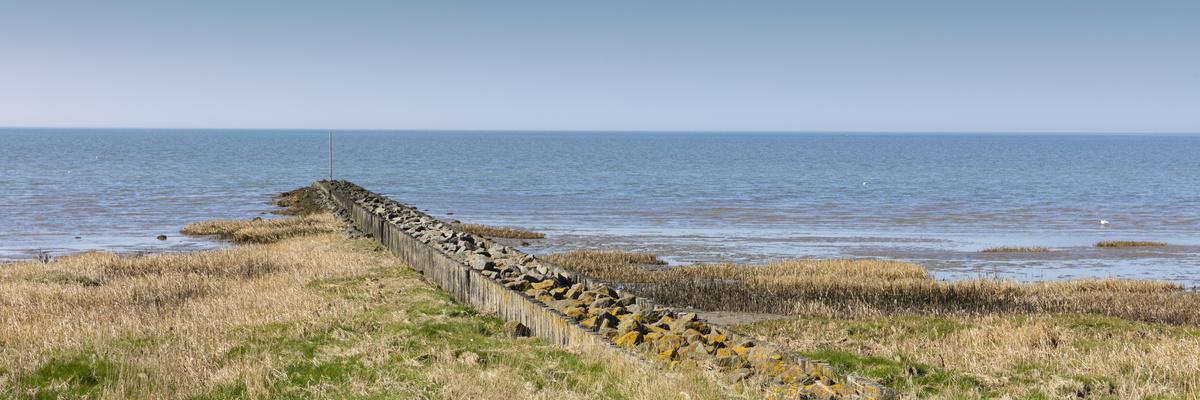 Holzbuhnen führen durch die trockenen Salzwiesen zum Wattenmeer