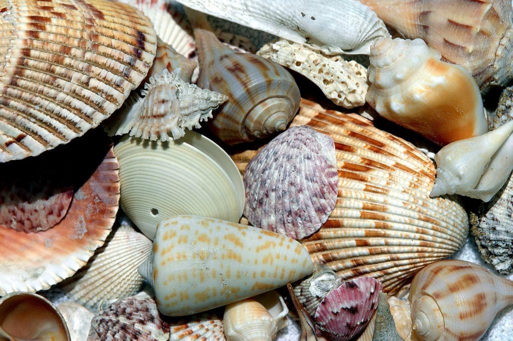 Kuriose Muscheln und Seeschnecken im Muschelmuseum auf Spiekeroog